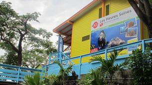 Plongée sous-marine-Réserve Cousteau-Plongées Exploration Guidées ou Autonomes à Basse-Terre, Guadeloupe-3