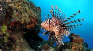 Plongée sous-marine-Réserve Cousteau-Stage de Plongée FFESSM dans la Réserve Cousteau en Guadeloupe-5
