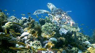 Plongée sous-marine-Saint-François-Bi-Plongées Exploration à Saint-François, Guadeloupe-4