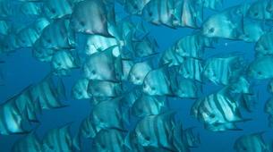 Plongée sous-marine-Le Marin-Plongées d'Exploration au Marin, Martinique-4