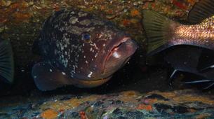 Plongée sous-marine-L'Île-Rousse-Baptême de plongée à Ile Rousse, Corse-1