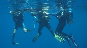 Plongée sous-marine-Le Marin-Plongées d'Exploration au Marin, Martinique-1