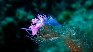 Plongée sous-marine-L'Île-Rousse-Baptême de plongée à Ile Rousse, Corse-6