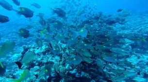 Plongée sous-marine-Bora Bora-Plongées Exploration à Bora Bora-3