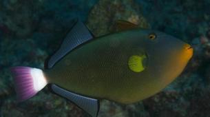 Plongée sous-marine-Bora Bora-Plongées Exploration à Bora Bora-10