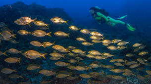 Scuba Diving-Faial-Guided adventure dives in Faial, Portugal-4