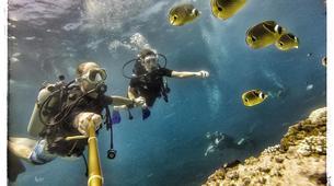Plongée sous-marine-Baie de Saint-Leu-Plongées Autonomes dans la Baie de Saint Leu, La Réunion-1