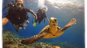 Plongée sous-marine-Baie de Saint-Leu-Plongées Autonomes dans la Baie de Saint Leu, La Réunion-3