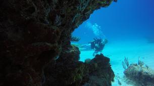 Plongée sous-marine-La Désirade-Plongées Exploration Guidées sur l'Île de la Désirade-4