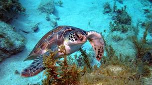 Scuba Diving-Les Trois-Îlets-First dive in Martinique-5