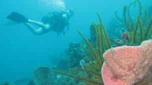 Plongée sous-marine-Le Marin-Plongées d'Exploration au Marin, Martinique-6