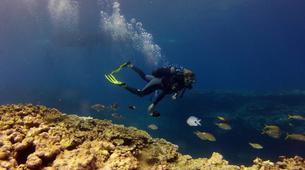 Plongée sous-marine-Baie de Saint-Leu-Plongées Autonomes dans la Baie de Saint Leu, La Réunion-6