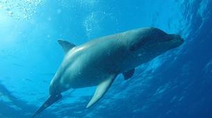 Plongée sous-marine-La Désirade-Plongées Exploration Guidées sur l'Île de la Désirade-2