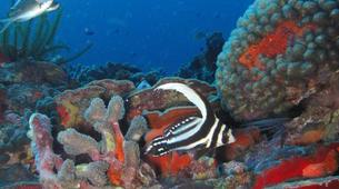 Plongée sous-marine-Le Marin-Plongées d'Exploration au Marin, Martinique-5