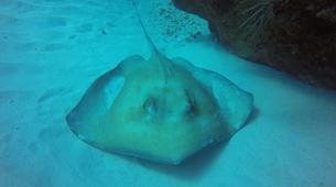 Plongée sous-marine-La Désirade-Plongées Exploration Guidées sur l'Île de la Désirade-5
