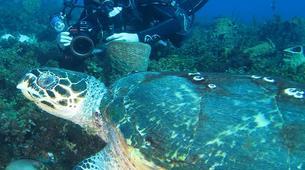 Plongée sous-marine-Le Marin-Plongées d'Exploration au Marin, Martinique-3