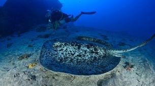 Plongée sous-marine-Baie de Saint-Leu-Plongées Exploration Guidées dans la Baie de Saint Leu, La Réunion-4