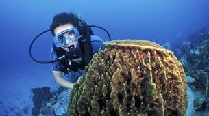Plongée sous-marine-Les Trois-Îlets-Stage de Plongée Niveau 1 ANMP aux Trois-Îlets, Martinique-4