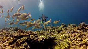 Plongée sous-marine-Baie de Saint-Leu-Plongées Autonomes dans la Baie de Saint Leu, La Réunion-5