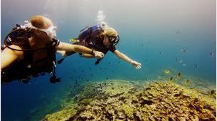 Plongée sous-marine-Baie de Saint-Leu-Plongées Autonomes dans la Baie de Saint Leu, La Réunion-4