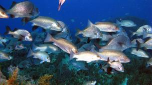 Scuba Diving-Les Trois-Îlets-First dive in Martinique-6
