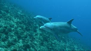 Plongée sous-marine-Port-Louis, Grande-Terre-Baptême de Plongée à Port-Louis, Guadeloupe-4