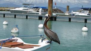 Snorkeling-Port-Louis, Grande-Terre-Excursions Snorkeling à Port-Louis, Guadeloupe-6