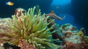 Plongée sous-marine-Port-Louis, Grande-Terre-Formation SSI Open Water Diver à Port-Louis, Guadeloupe-1