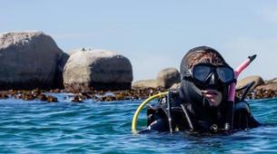 Tauchen-Cape Town-Private Open Water scuba diving course in Cape Town-1