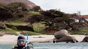 Tauchen-Cape Town-Private Open Water scuba diving course in Cape Town-6