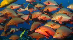 Plongée sous-marine-Moorea-Baptême de Plongée Moorea-4