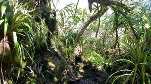 Randonnée / Trekking-Cirque de Salazie, Hell-Bourg-Randonnée dans la Forêt de Bélouve, La Réunion-2