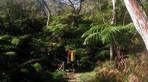 Randonnée / Trekking-Cirque de Salazie, Hell-Bourg-Randonnée dans la Forêt de Bélouve, La Réunion-3