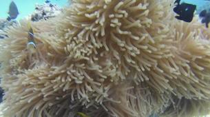 Plongée sous-marine-Moorea-Baptême de Plongée Moorea-5