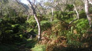 Randonnée / Trekking-Cirque de Salazie, Hell-Bourg-Randonnée dans la Forêt de Bélouve, La Réunion-4