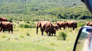 Safari-Le Cap-5D/4N Garden Route and Addo tour from Cape Town-1