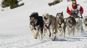Dog sledding-Andorra-Mushing excursion in Port d' Envalira, Andorra-5