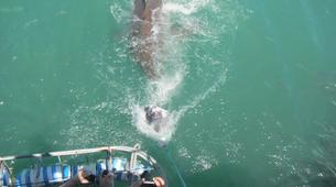 Shark Diving-Gansbaai-Cage diving with great white sharks in Gansbaai-6