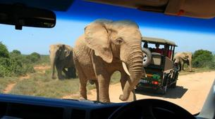Safari-Le Cap-5D/4N Garden Route and Addo tour from Cape Town-3