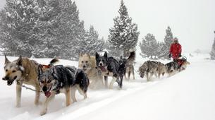 Dog sledding-Andorra-Mushing excursion in Port d' Envalira, Andorra-1