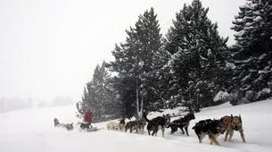 Dog sledding-Andorra-Mushing excursion in Port d' Envalira, Andorra-6