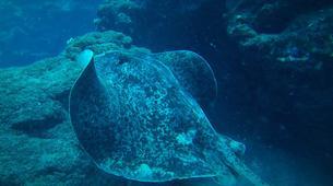 Plongée sous-marine-Lagon de Saint-Gilles-Plongée Exploration Guidée à Saint-Gilles les Bains-2