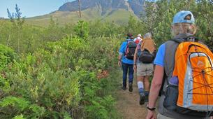 Hiking / Trekking-Cape Town-Hiking excursion up Skeleton Gorge in Cape Town-1