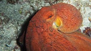 Plongée sous-marine-Lagon de Saint-Gilles-Plongée Exploration Guidée à Saint-Gilles les Bains-6