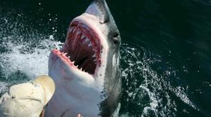 Shark Diving-Gansbaai-Cage diving with great white sharks, Gansbaai-6