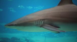 Shark Diving-Durban-Raggie diving excursion in Kwazulu Natal-4