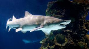 Shark Diving-Durban-Raggie diving excursion in Kwazulu Natal-5
