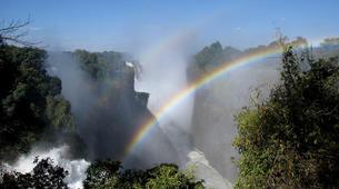 Safari-Victoria Falls-Chobe National Park safari excursion (Victoria Falls)-5