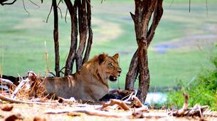 Safari-Victoria Falls-Chobe National Park safari excursion (Victoria Falls)-2