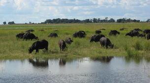 Safari-Victoria Falls-Chobe National Park safari excursion (Victoria Falls)-6